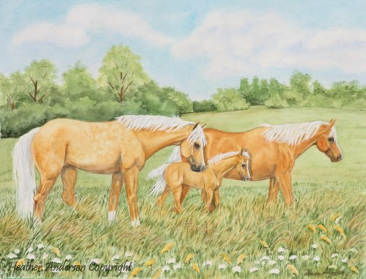 The watercolor painting of Palominos and foal among wildflowers. Art for horse lovers by Heather Anderson.